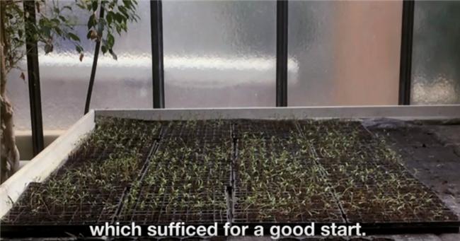 An Art-Style Quinoa Farmer- for Our German Client